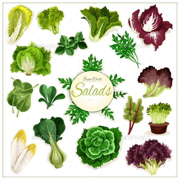 Salad Greens, Leafy Vegetables Vector Poster - Food Objects