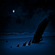 Shipwreck On Beach In The Moonlight - VideoHive Item for Sale