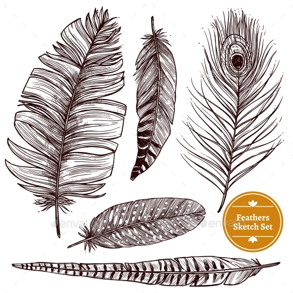 Hand Drawn Feathers Set - Animals Characters