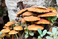 Young edible mushrooms