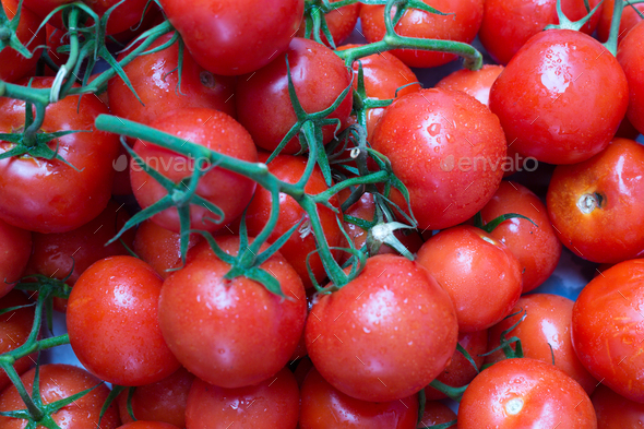 Red, ripe tomatoes on a branch - Stock Photo - Images