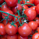 Red, ripe tomatoes on a branch - PhotoDune Item for Sale