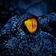 Crocodile With Eyes Glowing - VideoHive Item for Sale
