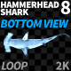 Hammerhead Shark 8 Bottom View - VideoHive Item for Sale