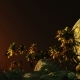 Palms in Desert at Sunset - VideoHive Item for Sale