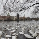 Lot of Swans and Ducks in the River Vltava - VideoHive Item for Sale