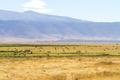 Herds of wild animals grazing in Ngorongoro