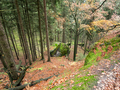 Deep ravine in the forest - PhotoDune Item for Sale