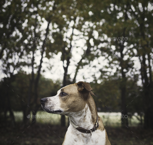 Dog in front of Trees - Stock Photo - Images