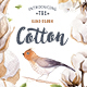 Watercolour Cotton & Birds - GraphicRiver Item for Sale