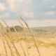 High Dry Grass in the Dunes - VideoHive Item for Sale