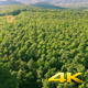 Aerial Fly Above Forest in Nature 02 - VideoHive Item for Sale