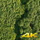 Aerial Fly Above Forest in Nature  - VideoHive Item for Sale