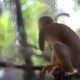 The Monkey at the Zoo Through the Grill Eats the Corn at the Hands of the Man - VideoHive Item for Sale