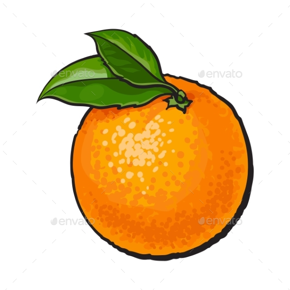 Realistic Colorful Hand Drawn Ripe Orange - Food Objects