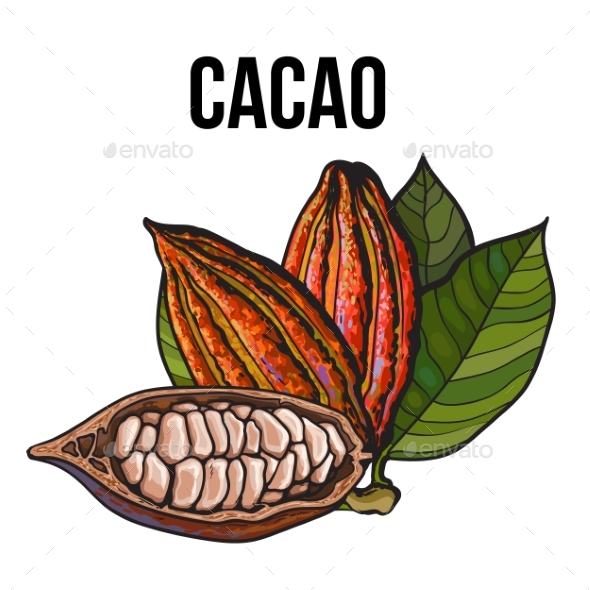 Hand Drawn Whole and Half Cacao Fruits with Leaves - Flowers & Plants Nature