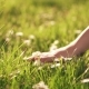 Female Hand on Green Lush Grass - VideoHive Item for Sale
