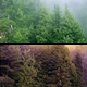 Flying Over Misty & Magical Forest - 2 Versions - VideoHive Item for Sale