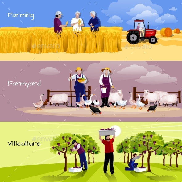 Vineyard Farmyard Crop Harvesting Flat Banners - Miscellaneous Conceptual