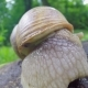 a Snail Puts Out Its Horns - VideoHive Item for Sale