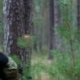 Military Special Forces Moving in the Forest. - VideoHive Item for Sale