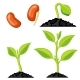 Plant Growth Stages From Seed to Sprout - GraphicRiver Item for Sale