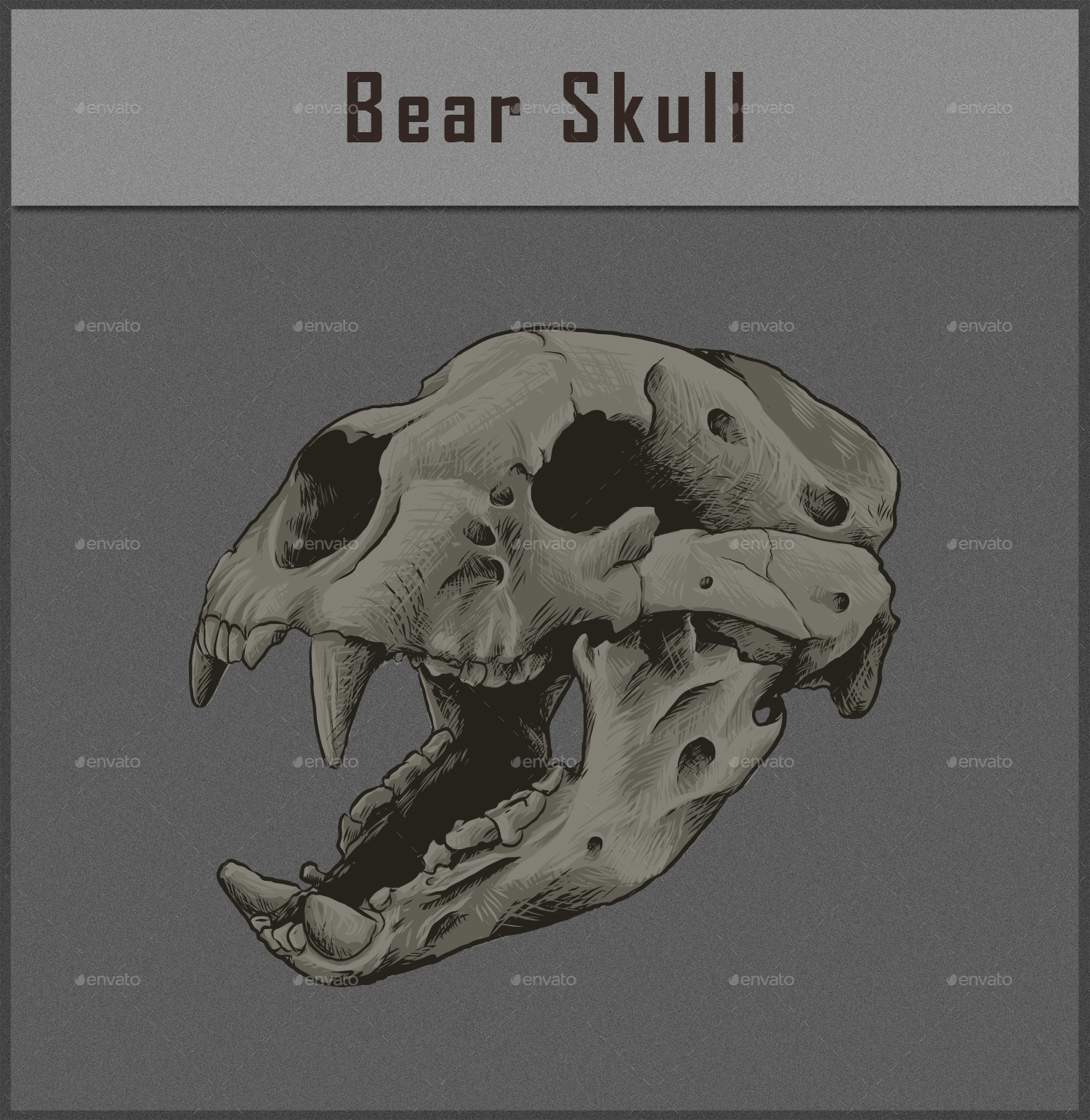 Animal skull vol 1 by azurapus graphicriver bear skullg magicingreecefo Choice Image