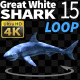 Shark 15 Swims in a Circle - VideoHive Item for Sale