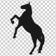 Horse Pesade Silhouettes - 2 Scene - VideoHive Item for Sale