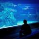 Man Watching Fish Through Glass In Aquarium - VideoHive Item for Sale