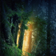 Magical Forest With Golden Light Glowing Through Trees - VideoHive Item for Sale