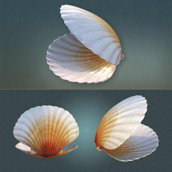 Seashell - 3DOcean Item for Sale