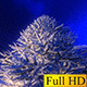 Illuminated Winter Fir - VideoHive Item for Sale