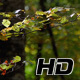 Beech Forest Branches with Leaves in Early Fall - VideoHive Item for Sale