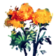 Watercolor Marigold flower - GraphicRiver Item for Sale
