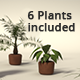 Potted Plants Set - 3DOcean Item for Sale