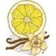 Ripe Yellow Lemon Slice and Vanilla Flower - GraphicRiver Item for Sale