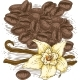 Vanilla Flower with Two Sticks and Coffee Beans - GraphicRiver Item for Sale