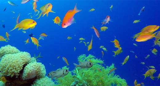 Underwater Sea World Life