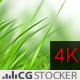Nature Wonders Grass Scene - VideoHive Item for Sale