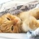 Cute Ginger Cat Lying in Bed Under a Blanket. Fluffy Pet Comfortably Settled To Sleep. Cozy Home - VideoHive Item for Sale