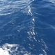 Blue Sea Water Passing View From a Moving Boat - VideoHive Item for Sale