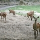 Deer Meadow - VideoHive Item for Sale