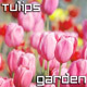 Tulips in Summer Garden - VideoHive Item for Sale
