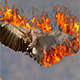 Animated Fire Photoshop Add-on - GraphicRiver Item for Sale