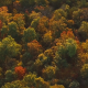 Flying Above Fall Trees at Sunset - VideoHive Item for Sale