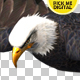 Eagle 01 - VideoHive Item for Sale