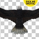 Eagle 03 - VideoHive Item for Sale