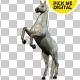White Horse Rearing 02 - VideoHive Item for Sale
