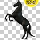 Black Horse Rearing 01 - VideoHive Item for Sale